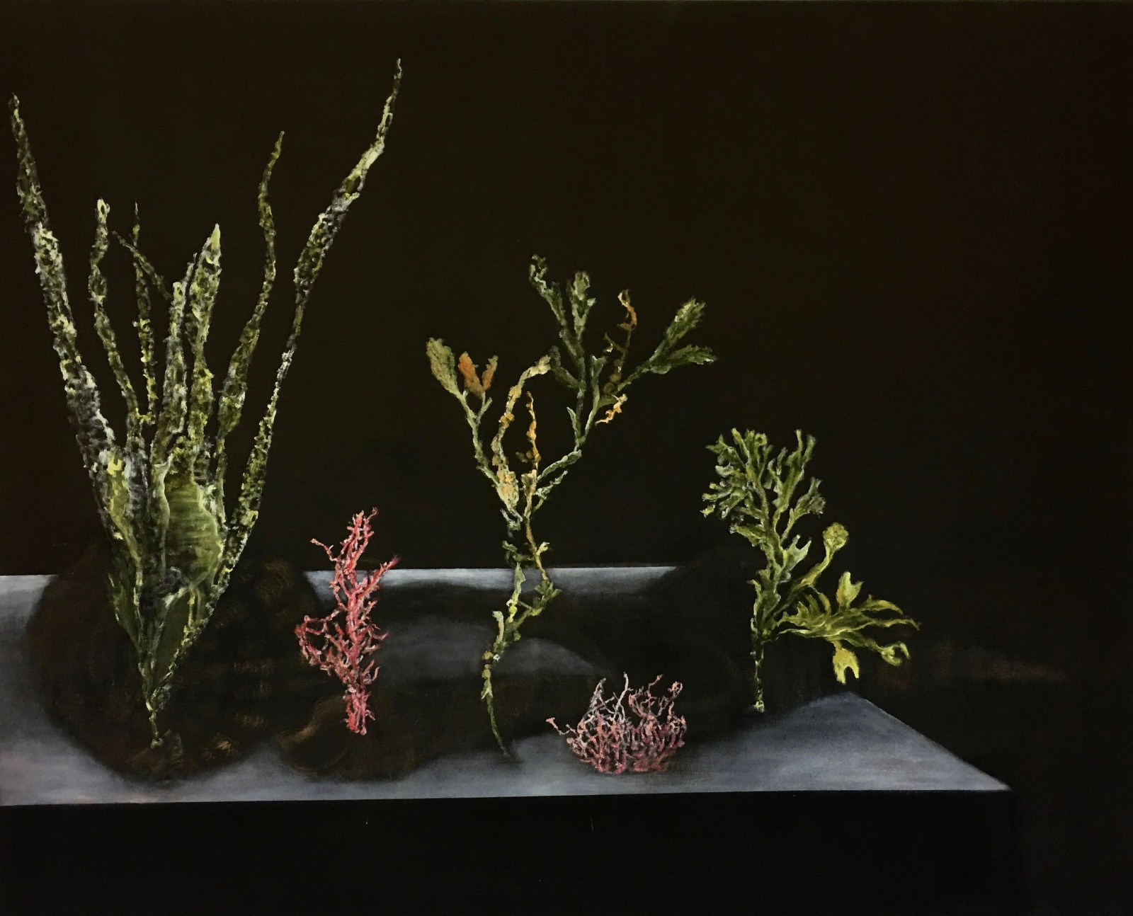 Still Life With Sea Weed af Irene Grundel